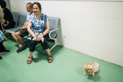 Hospital chino del animal doméstico imagenes de archivo