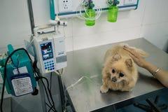 Hospital chino del animal doméstico fotografía de archivo