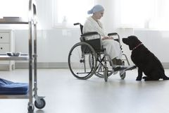 Hospital patient at pet therapy. Disabled hospital patient with cancer at pet therapy with a large black dog Royalty Free Stock Photos