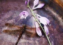 hosta degli ambiti di provenienza del metallo del fiore dell'estremità della libellula Fotografie Stock