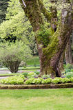 Hosta garden and lawn in a park Stock Photography