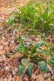 Hosta and Hemerocallis  in autumn Royalty Free Stock Photos