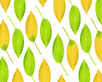 Hosta Leaf Beauty Stock Images