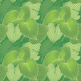 Hosta Pattern_Green Stock Photo