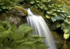 Hosta stream Royalty Free Stock Photo