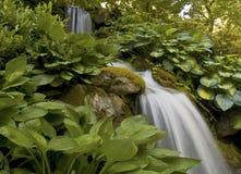 Hostas van de waterval Stock Foto's