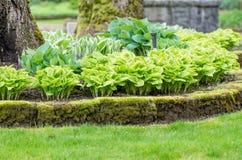 Hostaträdgård och gräsmatta i en parkera Royaltyfri Bild