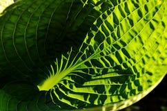 Hostis na luz solar Imagens de Stock Royalty Free
