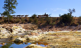 Hot acidic river Tinto and herd of goats Royalty Free Stock Photography