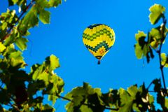 Wine Country Ballooning. A hot air balloon drifts among the vineyards. Sonoma County, California, USA royalty free stock images