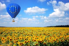 Hot Air Balloon with Flag of European Union Fly Over Sunflowers Field. 3d Rendering stock photo
