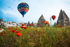 Air balloon over poppies field Cappadocia, Turkey stock images