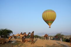 Hot air balloon flying over tribal nomad camel camp,Pushkar stock photo