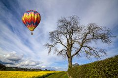 Hot air balloon on a blue sky. Hot air balloon over a field of yellow oilseed rape royalty free stock photo