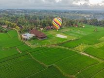 Hot air balloon over the green paddy field. Composition of nature and blue sky background. Travel concept.  stock photo
