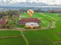Hot air balloon over the green paddy field. Composition of nature and blue sky background. Travel concept.  stock photos