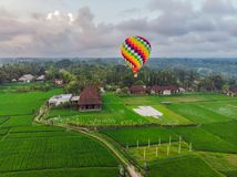 Hot air balloon over the green paddy field. Composition of nature and blue sky background. Travel concept.  royalty free stock images