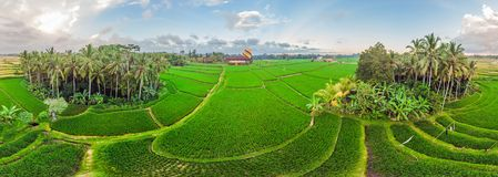 Hot air balloon over the green paddy field. Composition of nature and blue sky background. Travel concept.  royalty free stock photo