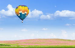Hot air balloon over pink cosmos fields. With blue sky background Stock Photo