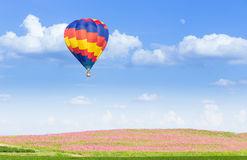 Hot air balloon over pink cosmos fields. With blue sky background Royalty Free Stock Images