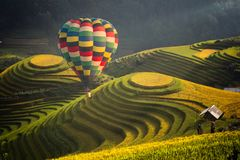 Hot air balloon over rice field in Mu cang chai. Vietnam royalty free stock photography