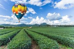 Hot air balloon over tea plantation. Hot air balloon over green tea plantation Stock Image