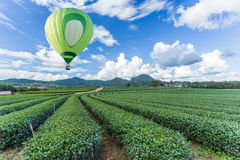Hot air balloon over tea plantation Stock Photography