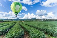 Hot air balloon over tea plantation. Hot air balloon over green tea plantation Stock Photography