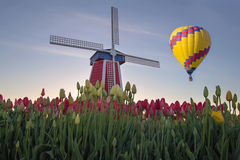 Hot Air Balloon Over Tulip Field Royalty Free Stock Photography