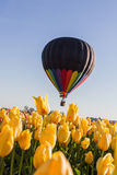 Hot air balloon ride over the tulips Royalty Free Stock Photography