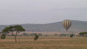 Hot air balloon in the Serengeti stock footage