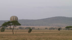 Hot air balloon in the Serengeti stock video