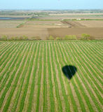 Hot air balloon shadow over row crop field Stock Photography