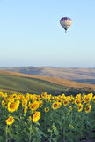 Hot-air balloon in Tuscany royalty free stock photo