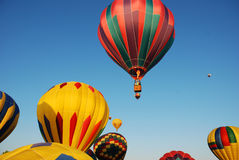 Hot Air Balloons. Getting ready to take off in the early morning  at a balloon rally Stock Image