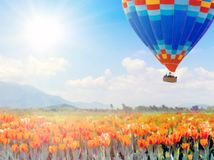 Hot air balloons field spring tulips royalty free stock photography