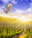 Hot Air Balloons Flying Above Beautiful Green Grape Vineyard Royalty Free Stock Photos