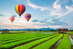 Hot-air balloons flying over fresh rice field Stock Image