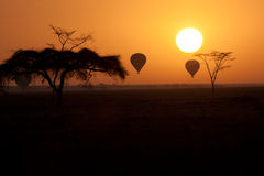 Hot Air Balloons flying over Serengeti Tanzania at stock photo