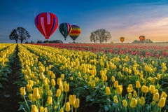 Hot air balloons hovering over tulips stock photography