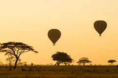 Hot Air Balloons over the Serengeti. At sunrise Stock Photos