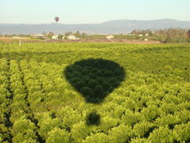 Hot Air Balloons Shadow over Orange Groves Royalty Free Stock Images