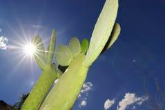 Hot Arizona Stock Photo