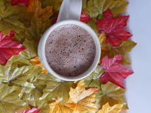 Autumn  hot  chocolate drink. Hot chocolate drink in a white mug set among colourful autumn leaves Royalty Free Stock Image