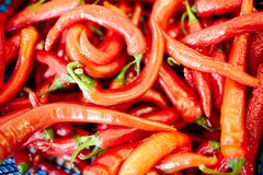 Hot background. Background of fresh red hot chili peppers on marketplace royalty free stock photos