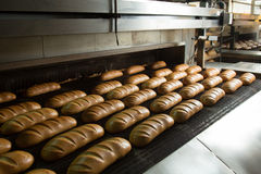 Hot baked breads on a line Royalty Free Stock Photos