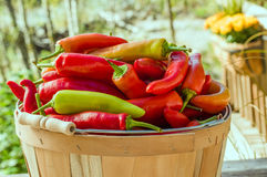 Hot banana peppers in basket Stock Image