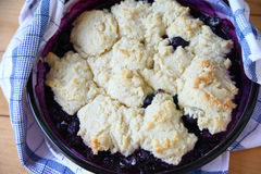 Hot  blueberry cobbler out of the oven Stock Photo