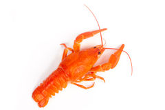 Hot boiled crayfish Royalty Free Stock Photo