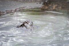 Hot boiling mud in Rotorua, New Zealand Royalty Free Stock Photo
